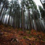 mgliste krajobrazy 2 150x150 Scenerie