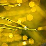 artystyczna fotografia, zdjecia artystyczne, fotografia przyrodnicza, zdjecia przyrodnicze, oryginalne zdjecia natury, kreatywne zdjecia natury, zdjecia kropli wody, kreatywne zdjecia wody, magia obrazu, fotografia anna bieniek, fotograf czechowice, kreatywny fotograf slask, artystyczne zdjecia slask, fotografia artyystyczna, kreatywne zdjecia przyrodnicze