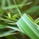 pasikonik zielony1 150x150 Makrofotografia
