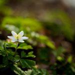 zdjecia przyrodniczne wiosna 150x150 Makrofotografia